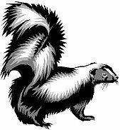 limericks laughs,funny limerick,skunk